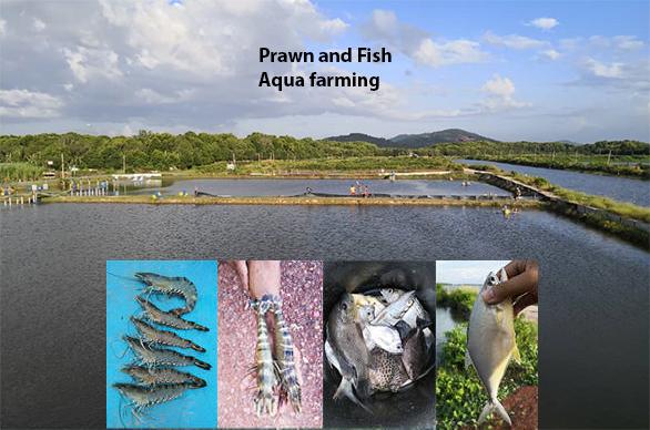 Kedah Prawn Farm 80 acres