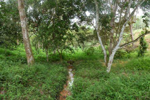 Jambu-Rias-1p3-acres-stream