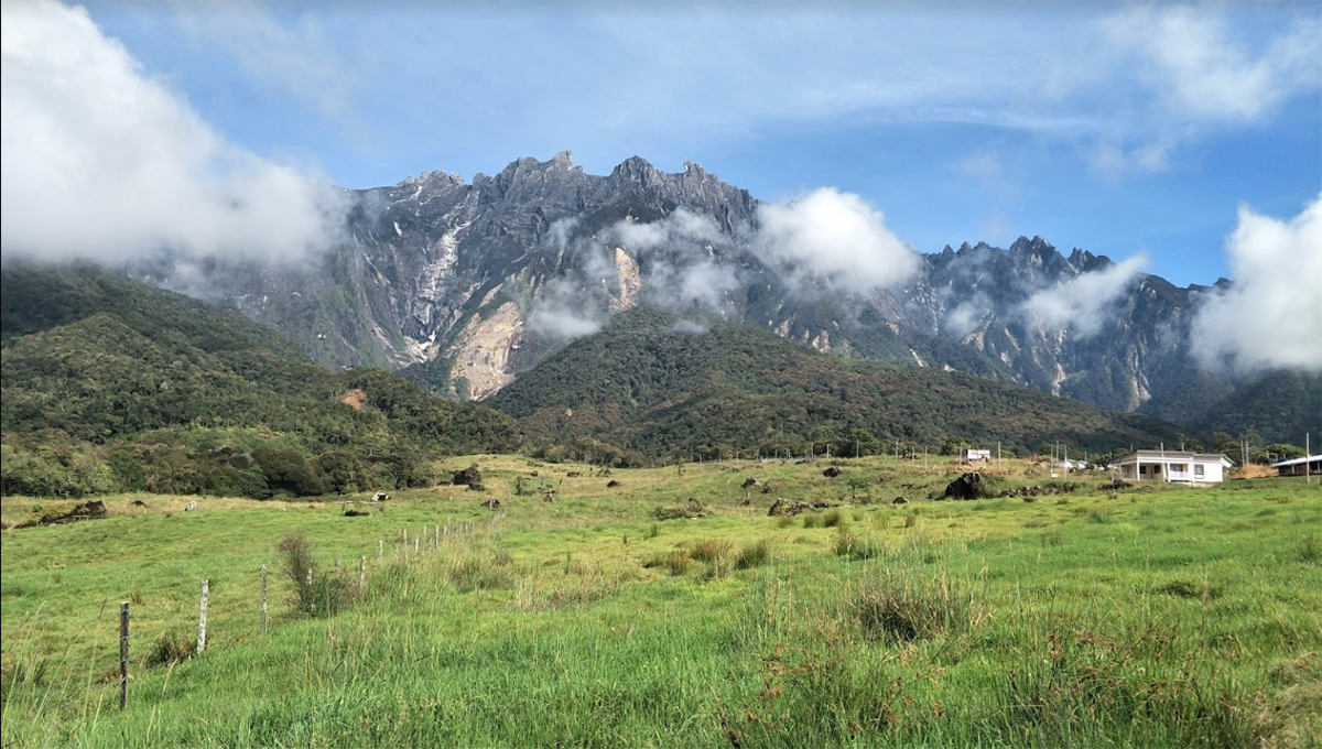 Kundasang cattle farm2