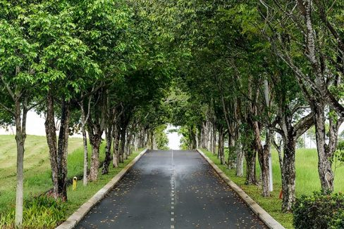Leisure farm trees lining road