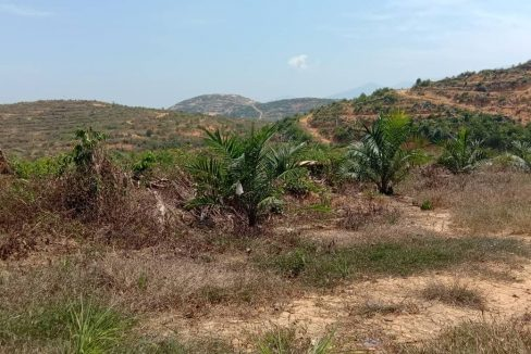 Lenggong 5,000 acres oil palm5