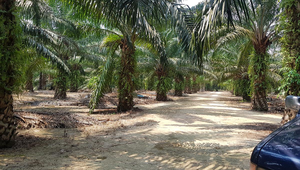 Pantai Remis 2 acres flat land