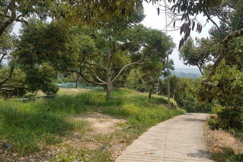 Bentong 25 acres mixed orchard-2