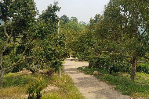 Bentong 25 acres mixed orchard-ridge