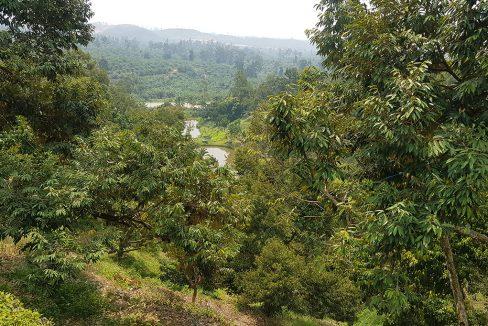 Bentong 25 acres mixed orchard-view towards fish pond