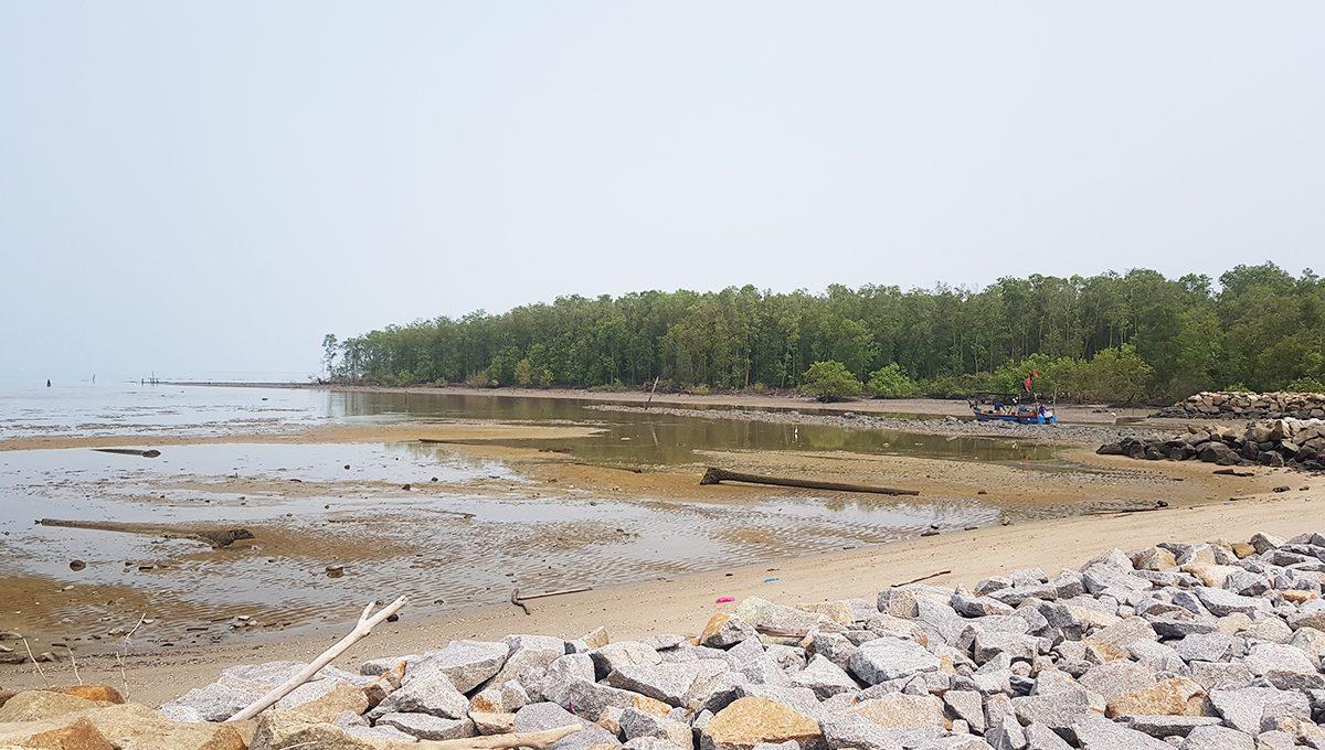 Butterworth development land - mangrove nearby
