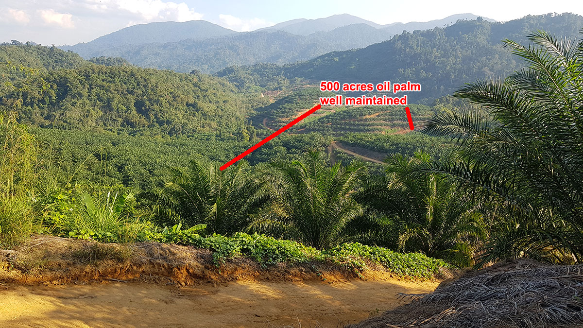 Lojing-500+500-acres-partly-oil-palm-2w1280