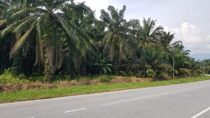 Freehold Oil Palm Plantation- 1188 acres, Perak