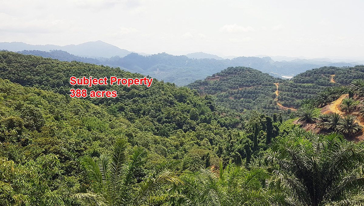 Gua Musang 388 acres for web (1)