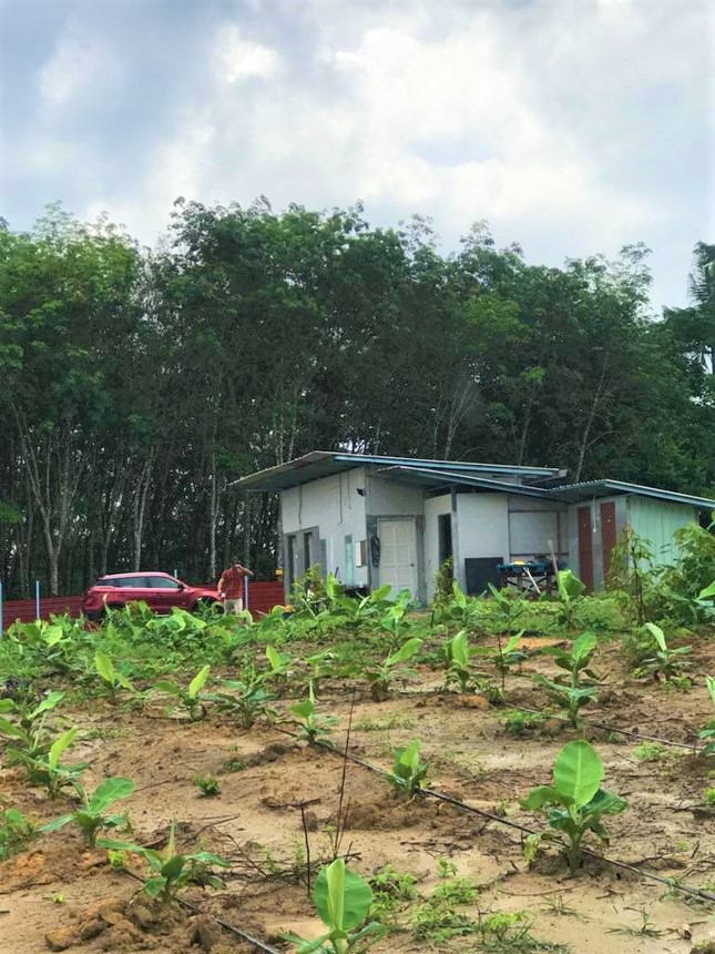 Musang King and Black Thorn Durian Orchard- 3 Acres, Gemencheh