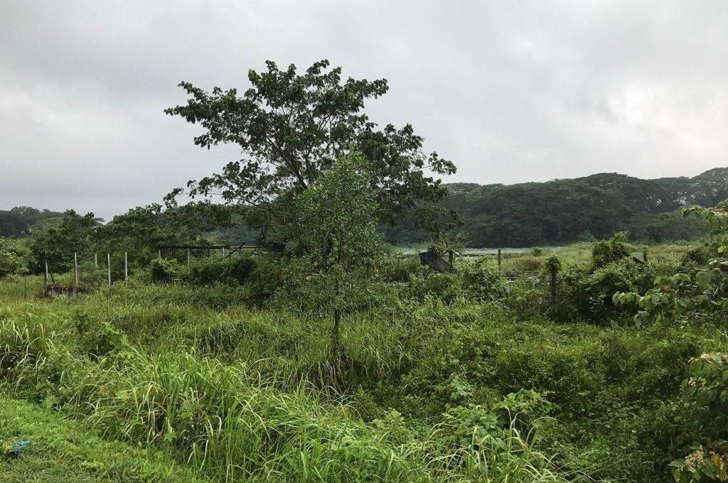 Batu Gajah 2 acres Freehold fish farm (4)