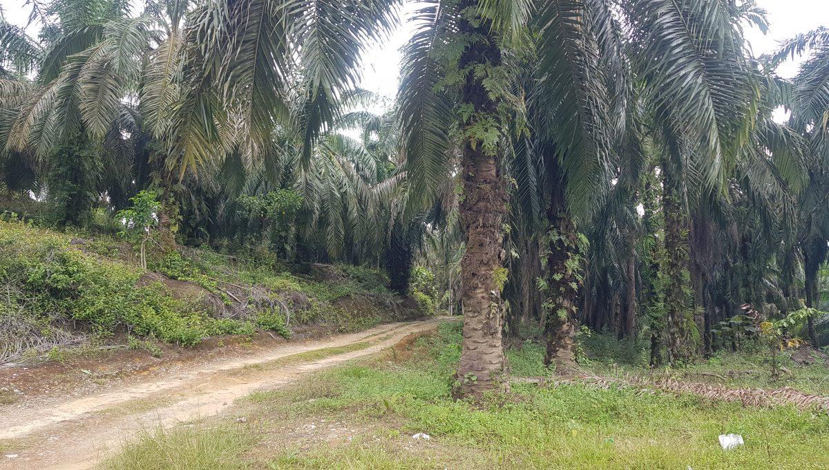 Batu Kurau 240 acres-Entrance