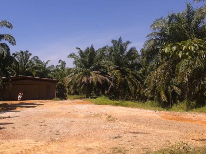 Kuala Ketil 240-acre Oil Palm Estate – Freehold
