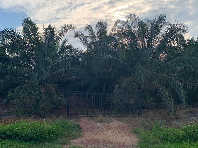 Muar – Batu Pahat 4.2 acres Suitable for Weekend Farming