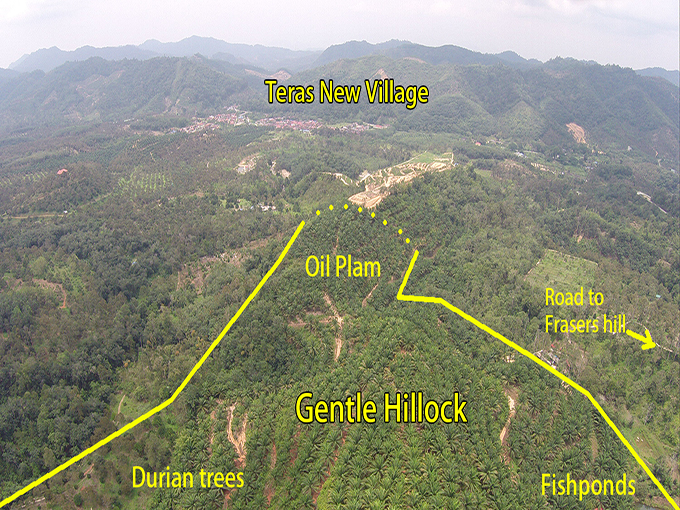 Bukit Frasers – 70 acres agriculture land (Oil Palm & Durian) 福隆港农业地