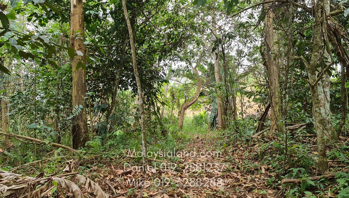 Bukit Tinggi Selesa Hillhome 2.5 acres cooling climate (1)
