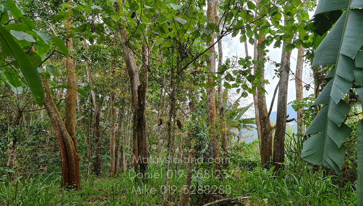 Bukit Tinggi Selesa Hillhome 2.5 acres cooling climate - land still has quite some flat land here