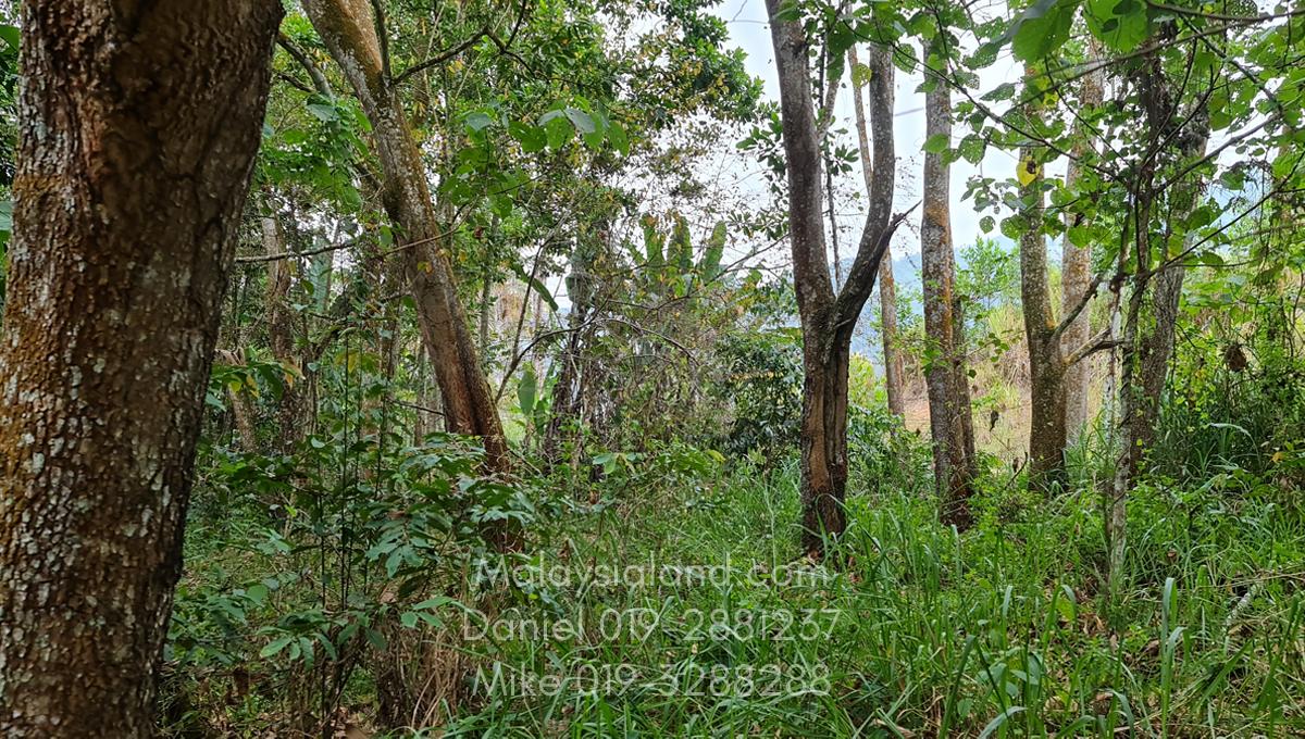 Bukit Tinggi Selesa Hillhome 2.5 acres cooling climate -land still have many big trees