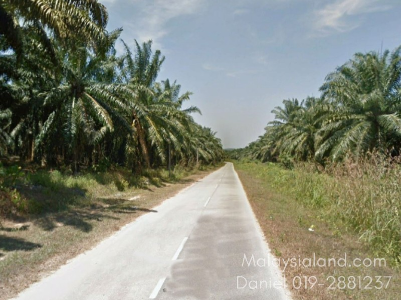 Kedah, Baling – 237 acres Freehold Rubber and Oil Palm estate