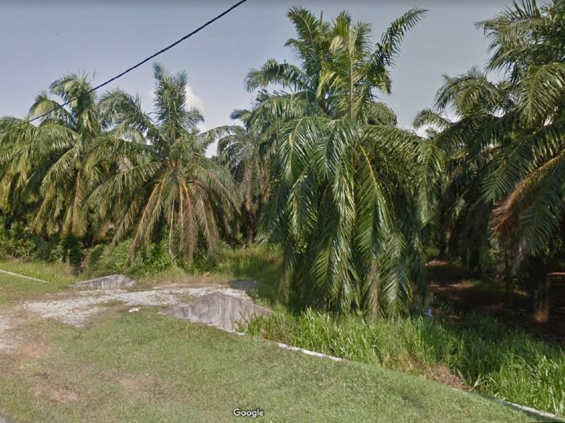 Perak, Beriah – 2.2 acres Freehold Agriculture Land