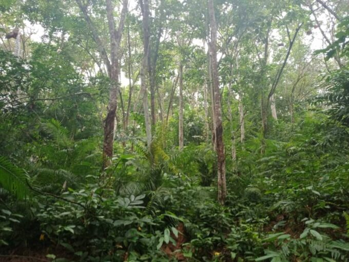 Dong, Pahang – 9 acres Freehold Agriculture Land with Water Source (Potential Durian Plantation)