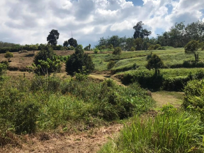 Raub, Pahang – 9 acres Freehold Musang King Durian Orchard with Stream