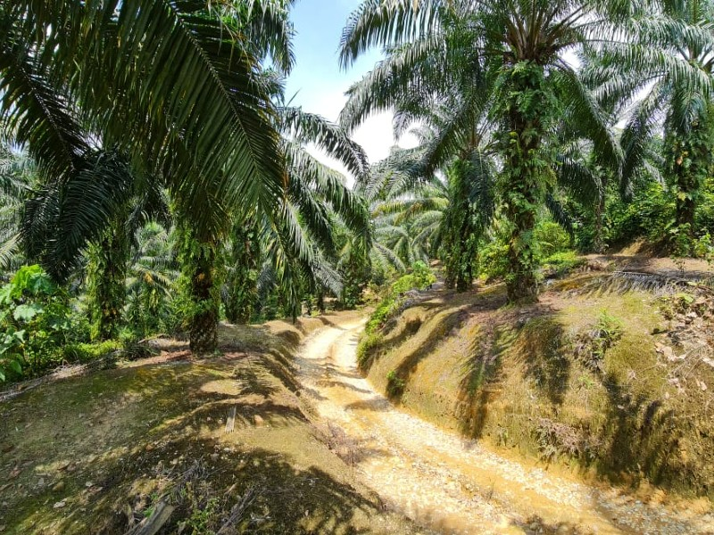 Kuala Kubu Bharu – 107 acres Freehold Oil Palm Land with water source and yield generating